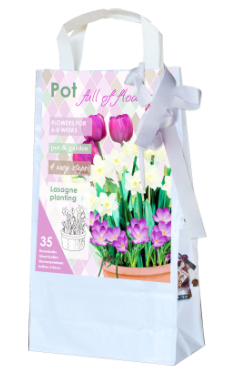 Flower Bulbs On A Terrace Balcony Or Patio For 6 To 8 Weeks
